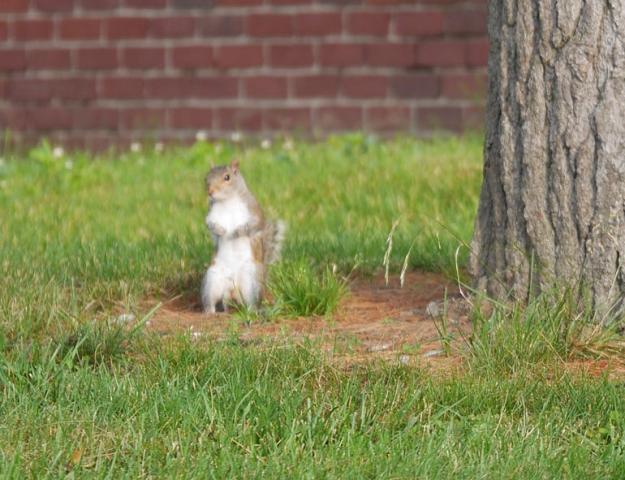 squirrel1
